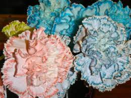 change in petal color change in petal color