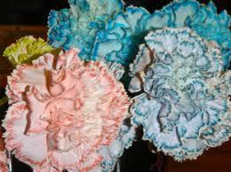 change in petal color change in petal color