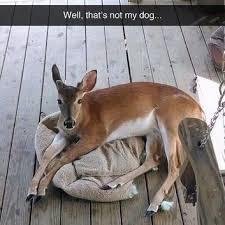 Deer Meme - deer memes 28 images illinois deer hunting first firearm season