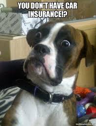 Dog In Car Meme - you don t have car insurance skeptical dog make a meme