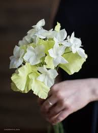 stephanotis flower 25 best stephanotis flower pictures ideas on