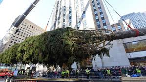 Rockefeller Tree Rockefeller Center Tree Arrives In Nyc Cbs News