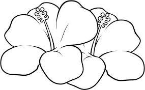 hawaiian flower coloring page netart