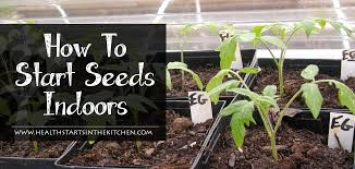 how to start seeds indoors health starts in the kitchen