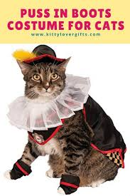 halloween costumes kitty cat 125 best kittens in costumes images on pinterest animals cats