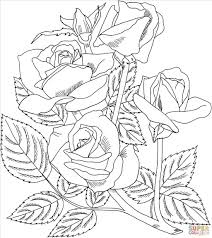 wonderful top roses coloring sheets wallpapers brilliant