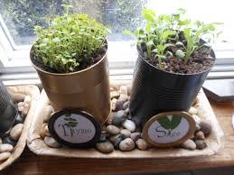 kitchen windowsill herb garden u2013 happily occupied homebodies