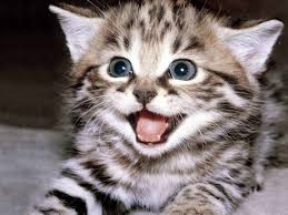 Happy Kitten Meme - happy kitten meme generator