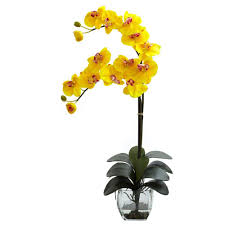 yellow orchid nearly phalaenopsis orchid with vase arrangement in