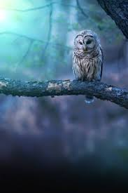 best 25 owl pictures ideas on pinterest cute owl photo unique