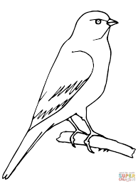 perched canary coloring page free printable coloring pages