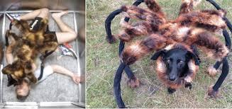 Spider Dog Halloween Costume 15 Creative Diy Dog Costumes Efforts