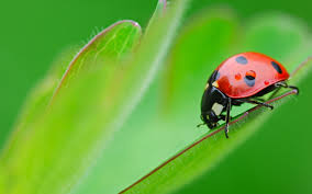 Cool Animal Wallpapers by Ladybug On Leaf Hd Animal Wallpapers Cool Animals Amazing