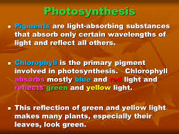 the absorption of light by photosynthetic pigments worksheet answers photosynthesis and cellular respiration ppt download