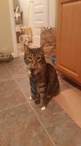 thanksgiving cat gif the fat cat album on imgur