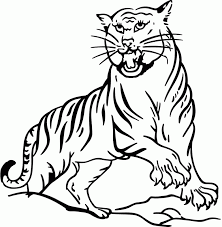 coloring pages of tigers tiger picture to color coloring home