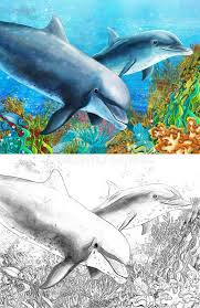 cartoon coral reef with dolphins with coloring page stock
