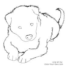 border collie dog puppy coloring