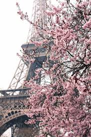 cherry blossom home decor paris photography paris je t u0027aime paris in the