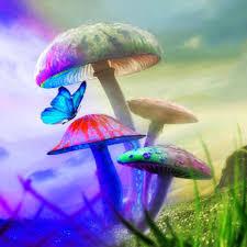wallpaper 3d mushroom 3d mushroom magic wallpaper free download of android version m