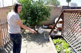 Home Decor Stores In Arizona Garden Pools Increase In Arizona Arizona Sonora News Service