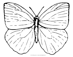 animal butterfly coloring pages animals