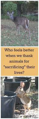 say a prayer for you giving thanks to animals for