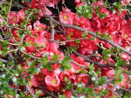 garden design garden design with winter flower winter flower with