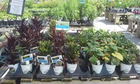 nursery native plants central ohio rain garden initiative central ohio rain garden