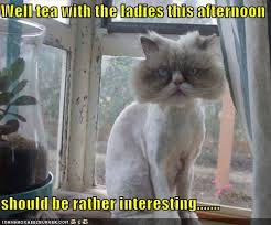 Cat Meme Ladies - well tea with the ladies i can has cheezburger funny cats cat