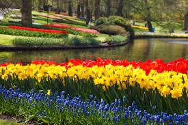 colorful flower gardens keukenhof flower gardens free stock photo public domain pictures