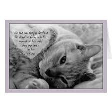 loss of pet loss of pet cat sympathy card cuddly cat on pillow zazzle
