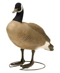 123 best goose decoys images on waterfowl