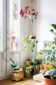 246 best plants indoor u0026 outdoor images on pinterest indoor
