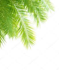palm tree leaves border stock photo om 28869383