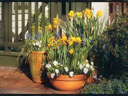 9 bulbs to plant now for spring southern living