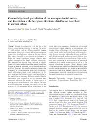 si e des motions dans le cerveau subdivision of the occipital lobes an pdf available