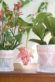 houseplants of the month may tropical beauties