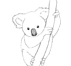 how to draw a koala draw central