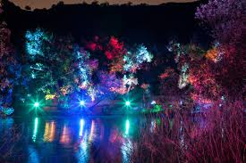 enchanted forest of light tickets tickets for enchanted forest of light which sold out last year