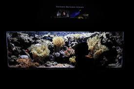 algal toxins from aquarium sickens dutch family upi com