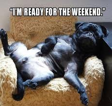 Weekend Dog Meme - i m ready for the weekend funny archives page 4 of 18 pug