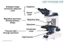 a light microscope image is formed by cells and tissues ppt download