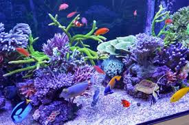 how to make fish tank decorations Fish Tank Decorations What to