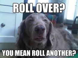Stoner Dog Meme - the cultural impact of internet memes all things dank