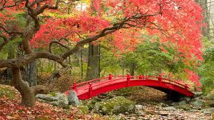 wallpaper autumn maple trees japanese garden 4k nature 3546