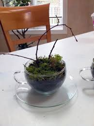 small and cool diy glass terrariums shelterness