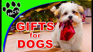 best christmas presents for dogs 2017 animal facts youtube
