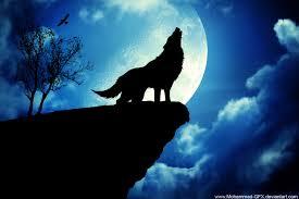 wallpaper wolf qygjxz