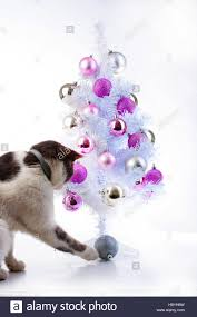 cat play with tree ornaments in white